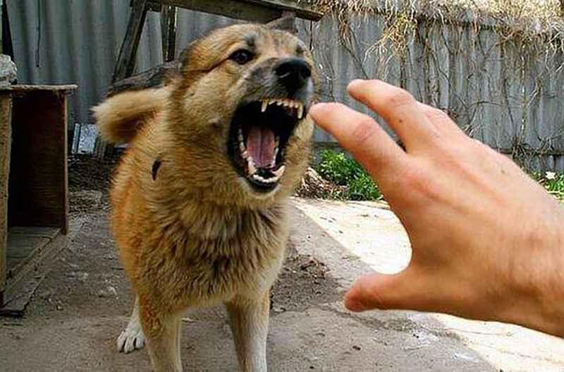 Дразнить собаку