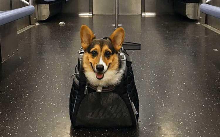 Перевозка собаки в метро