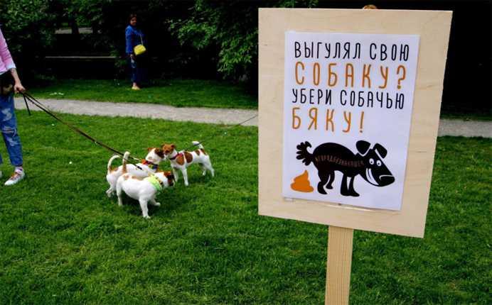 Правила выгула собаки