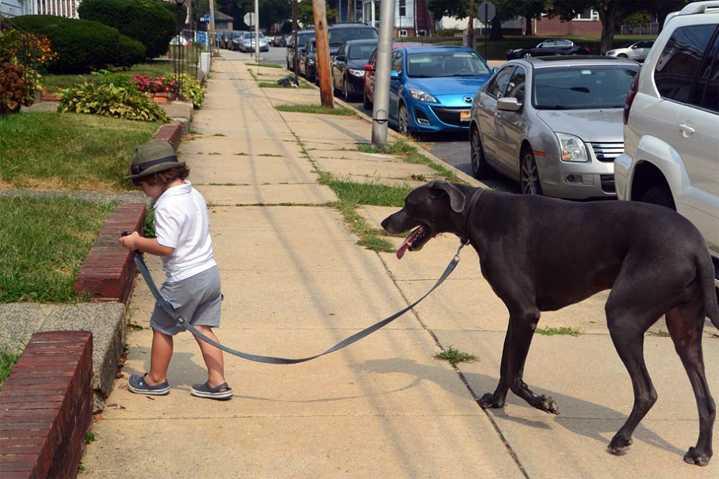 Ребенок выгуливает собаку