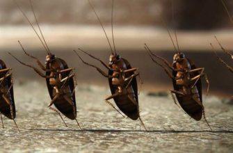 Тараканы бегут от соседей