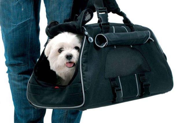 Закон о перевозке собак в метро