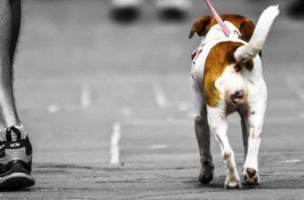 Запрещен выгул собаки
