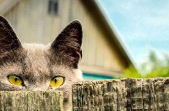 Соседский кот гадит