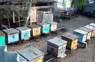 Соседские пчелы мешают жить